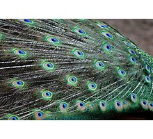 Peacock Feathers 2 Photographic Print