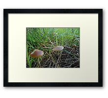 (how would you describe it?) Hey, it's nature dude Framed Print