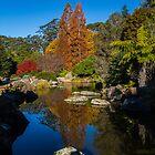 Mt Tomah Botanical Gardens by Peta Jade