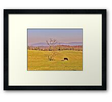 Tree In The Pasture Framed Print