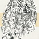 MaltiPoo Father & Son by BarbBarcikKeith
