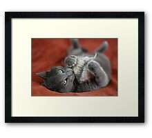 SunStoned Boris Framed Print