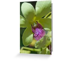 Maui Dendroblum Orchid  Greeting Card