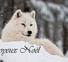 Arctic Wolf Christmas Card French 1 by WolvesOnly