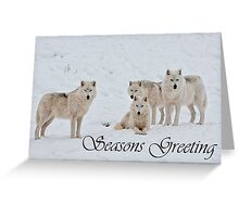 Arctic Wolf Seasons Card 2 Greeting Card