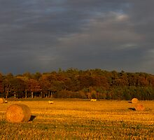Autumn Bales and Lambs by JASPERIMAGE