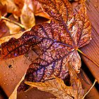 Autumn Leaves by Cee Neuner
