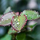 After The Rain  by heatherfriedman