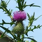 Lovely Thistle by Bea Godbee