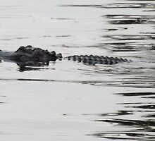 Rodman Gator 2 Artistic Photograph by Shannon Sears by twobrokesistas