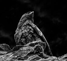Tawny Eagle at Aberdour Castle (B&W) by Miles Gray