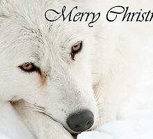 Arctic Wolf Christmas Card English 4 by WolvesOnly