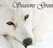 Arctic Wolf Seasons Card 4 by WolvesOnly