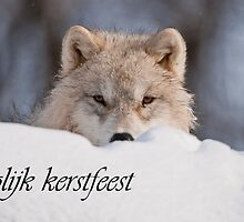 Arctic Wolf Christmas Card Dutch 7 by WolvesOnly