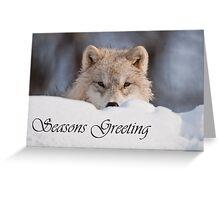 Arctic Wolf Seasons Card 7 Greeting Card