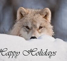 Arctic Wolf Holiday Card 7 by WolvesOnly
