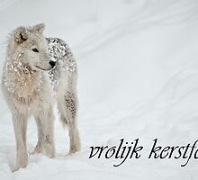 Arctic Wolf Christmas Card Dutch 8 by WolvesOnly