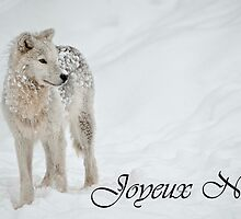 Arctic Wolf Christmas Card French 8 by WolvesOnly