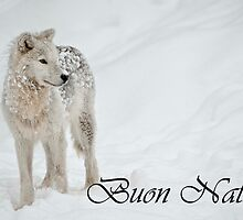 Arctic Wolf Christmas Card Italian 8 by WolvesOnly
