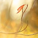 Last Leaf Standing by Tracy Friesen