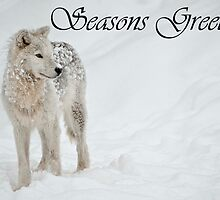 Arctic Wolf Seasons Card 8 by WolvesOnly