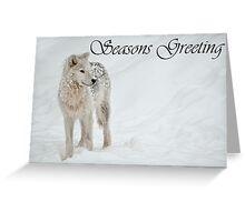 Arctic Wolf Seasons Card 8 Greeting Card