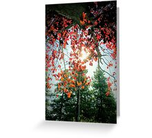 Treeserene Greeting Card