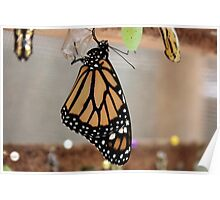 Emerging Butterfly Poster