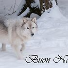 Timber Wolf Christmas Card Italian 1 by WolvesOnly