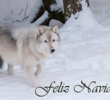 Timber Wolf Christmas Card Spanish 1 by WolvesOnly
