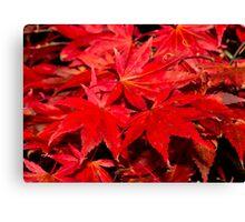 Autumn leaves. Canvas Print