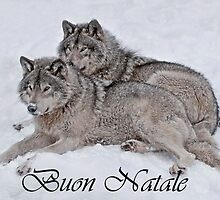 Timber Wolf Christmas Card Italian 2 by WolvesOnly