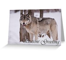Timber Wolf Seasons Card 3 Greeting Card