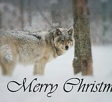 Timber Wolf Christmas Card English 5 by WolvesOnly