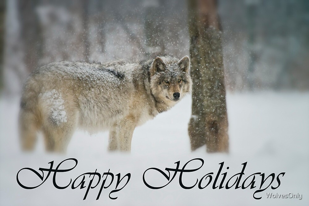 Timber Wolf Holiday Card 5 by WolvesOnly