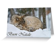 Timber Wolf Christmas Card Italian 7 Greeting Card