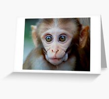 Baby Monkey  Greeting Card