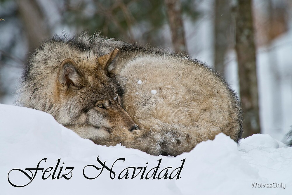 Timber Wolf Christmas Card Spanish 7 by WolvesOnly