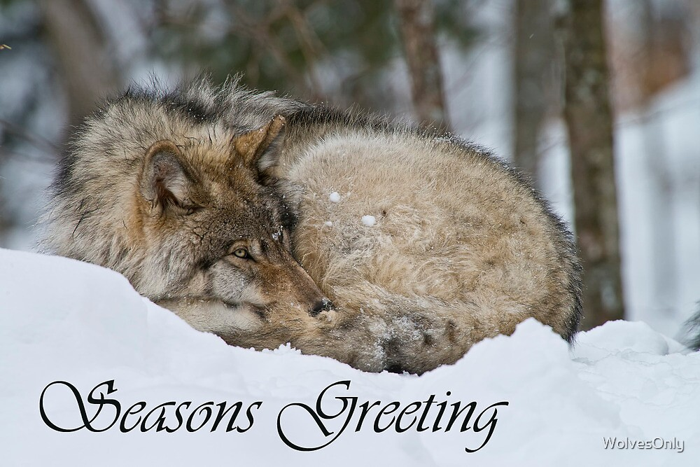 Timber Wolf Seasons Card 7 by WolvesOnly