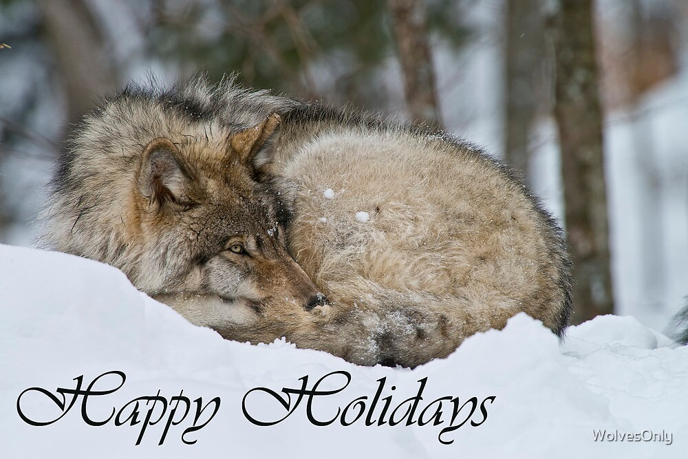 Timber Wolf Holiday Card 7 by WolvesOnly