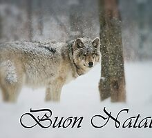 Timber Wolf Christmas Card Italian 5 by WolvesOnly