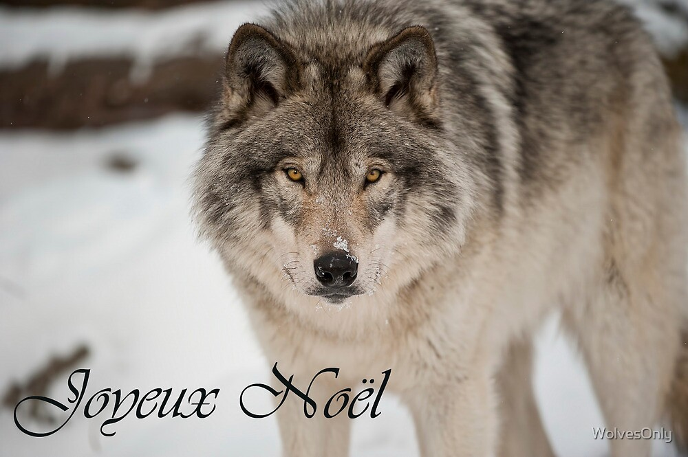 Timber Wolf Christmas Card French 8 by WolvesOnly
