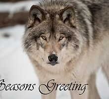 Timber Wolf Seasons Card 8 by WolvesOnly