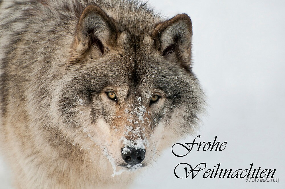 Timber Wolf Christmas Card German 9 by WolvesOnly