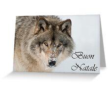 Timber Wolf Christmas Card Italian 9 Greeting Card