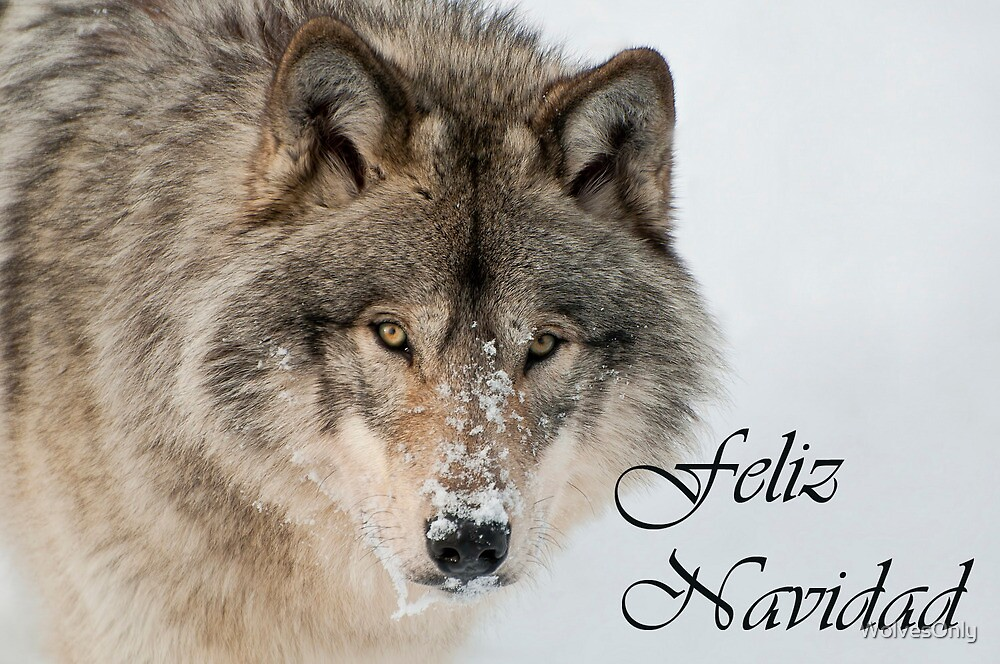 Timber Wolf Christmas Card Spanish 9 by WolvesOnly