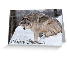 Timber Wolf Christmas Card English 10 Greeting Card