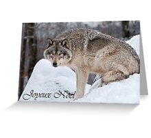 Timber Wolf Christmas Card French 10 Greeting Card