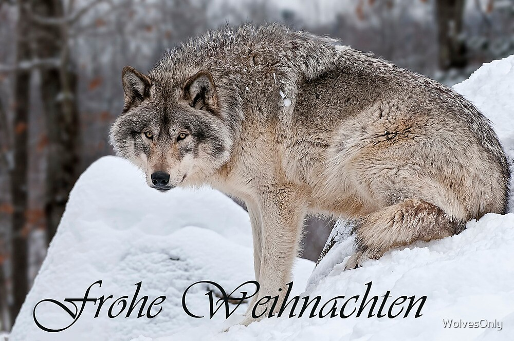 Timber Wolf Christmas Card German 10 by WolvesOnly