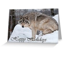 Timber Wolf Holiday Card 10 Greeting Card